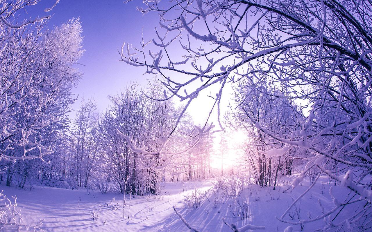 Coill faoir bhrat sneachta - Snow-covered woods